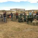 Farm Animal Display behind the CALF Agricultural Show Barn